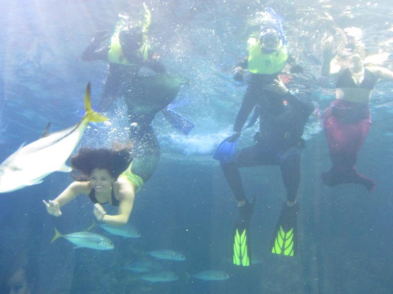 Denver Aquarium's Friday Family Nights Offers Great ...