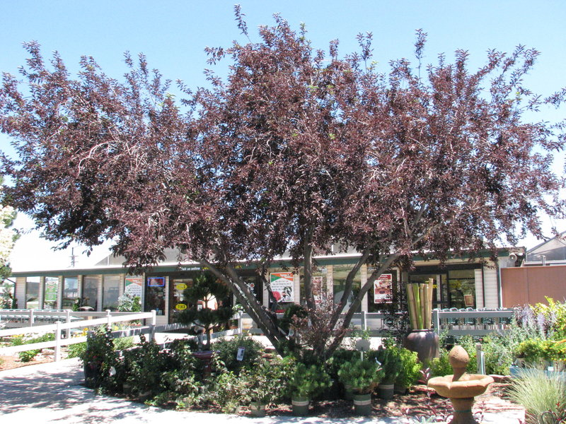 Top 5 trees for natural a c and crime reduction mile high mamas