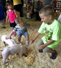 Hudson Henry, 7, right, of Colorado Springs,  Jaxon Miller, 18 months, of Pueblo, center, and Abriela Andrews, 2, of Colorado Springs meet a pair of piglets while visiting the FFA petting zoo in the Agricultural Pavilion on Sun., Aug 2, 2013 at the Colorado State Fair in Pueblo, Colo. Displays in the building feature Colorado agricultural products and business. ((AP Photo/The Pueblo Chieftain, Chris McLean)