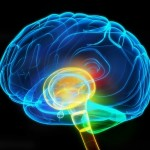 affect of stress on brain