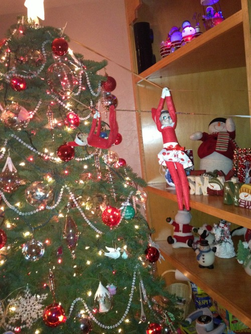Colorado Health Insurance >> Your Guide to Elf on the Shelf: Ideas for Lazy Parents ...