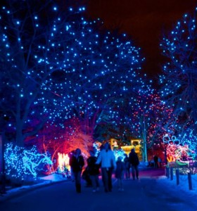 Denver Zoo Lights @ Denver Zoo | Denver | Colorado | United States