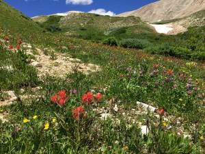 14erwildflowers