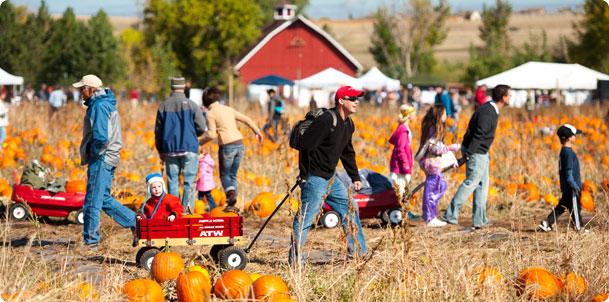 Denver pumpkin patches festivals mazes mile high mamas - Botanic gardens pumpkin festival ...
