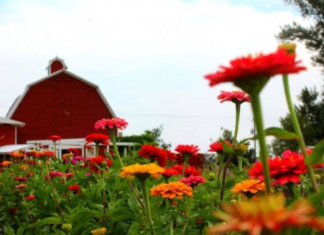 Colorado Farm Tours