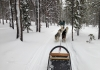 Dog Sledding Wonderland